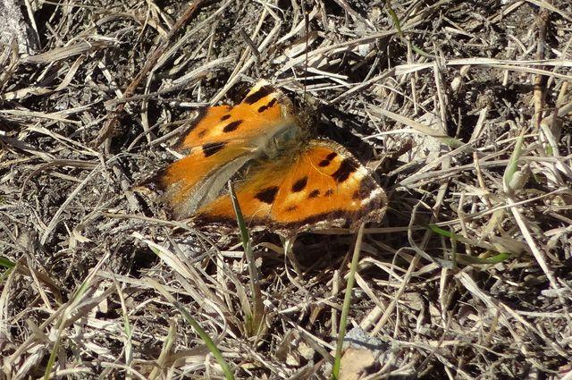 Нынешней весной бабочки в Тюмени появились раньше обычного.