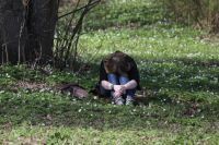 Весной обостряются психические заболевания.