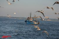 Рыбак - это диагноз, а не профессия.