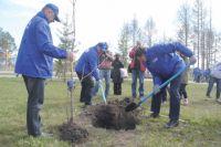 Тысячу деревьев высадят к ЧМ-2018 в Калининграде на набережной Ветеранов.