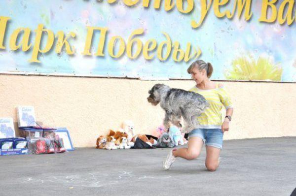 Выставка собак «Сапфир Дона». Показательные выступления с миттельшнауцером по имени Акарэль Авиаль (или просто Вита).