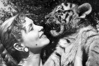 Народная артистка РСФСР, укротительница тигров Маргарита Назарова с двухмесячным тигрёнком. 1954 год.