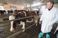 В Ивановской области налаживают производство говядины.