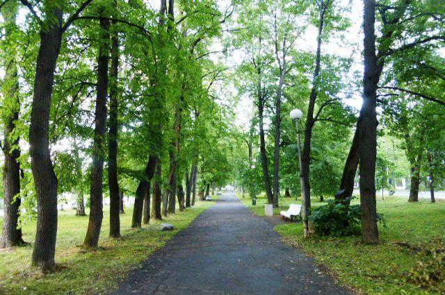 Левашовский бульвар в июле