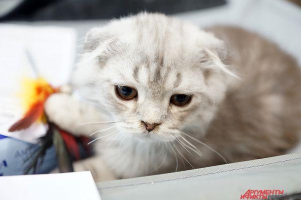 Международная выставка кошек открыла свои двери для пермяков в субботу, 16 апреля.