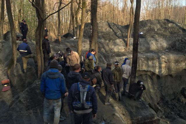 Копали перерыли под Зеленоградском лес в поисках янтаря.