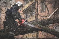 Уборка упавших деревьев уже ведется.