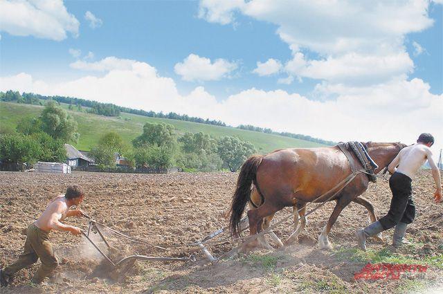 Земли в России много, а пашут и сеют лишь на мизерной её части.
