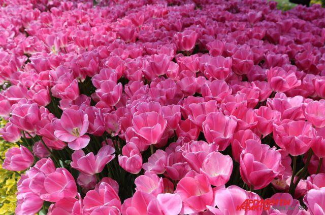 Картинки цветов природы