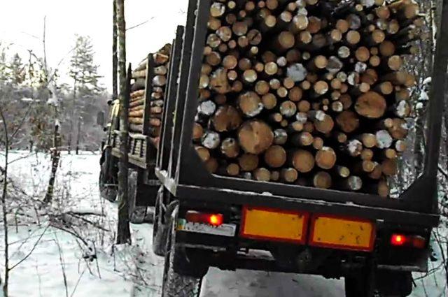 Лес перевозили по поддельным документам