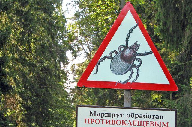 240 калининградцев пострадали от укусов клещей с начала эпидемического сезона.