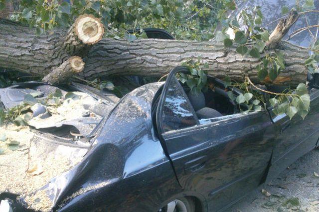 ВПензенской области упавшее намашину дерево убило троих человек