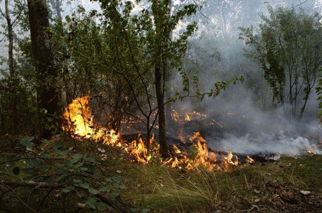 На далеком Востоке действуют семь лесных пожаров