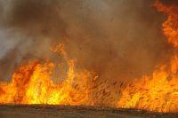 Огонь распространяется быстрее при сильном весеннем ветре.