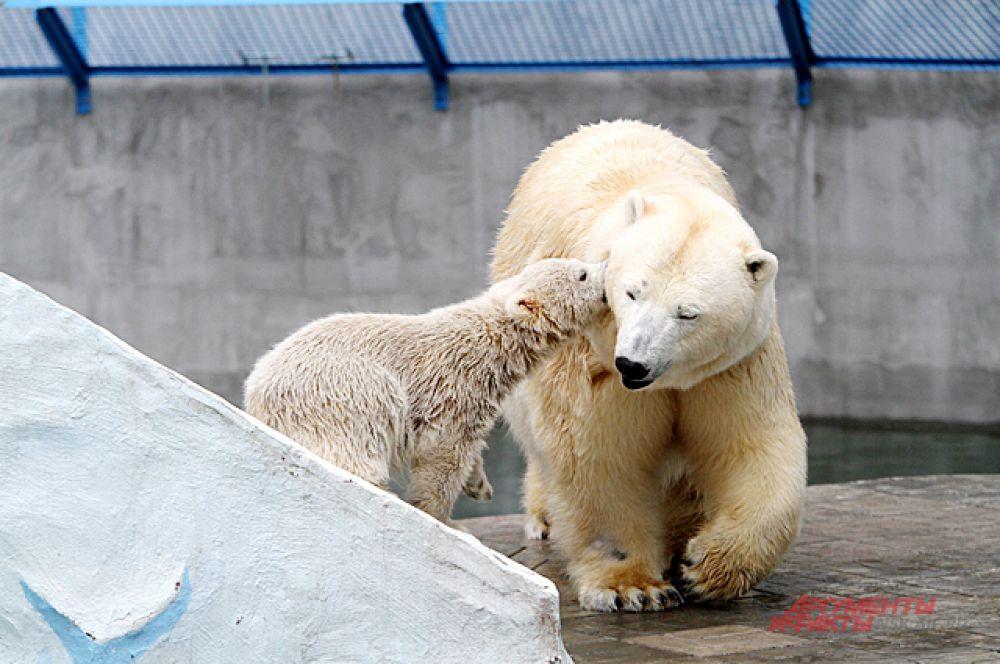 Выходит на прогулку медвежонок вместе с Гердой.