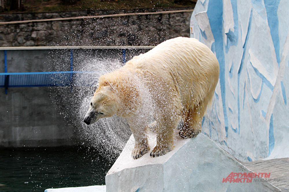 Он купается только в брызгах медведицы.