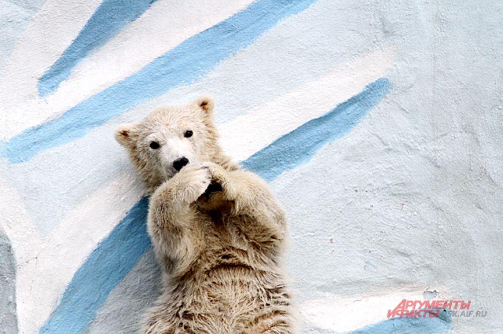 Внимание зрителей медвежонку нравится.