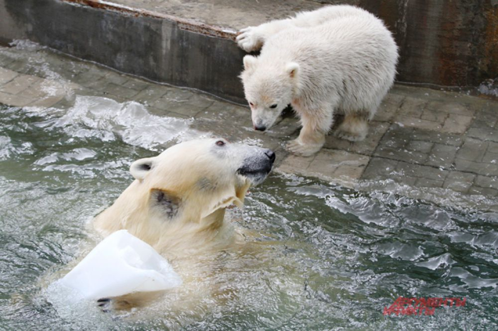 Приучить к воде медвежонка пока не получилось.