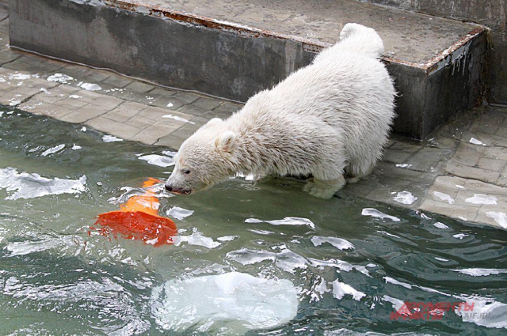За игрушками в бассейн медвежонок спускаться боится.