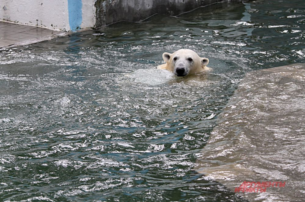 Отдохнуть от медвежонка Герда может в бассейне.