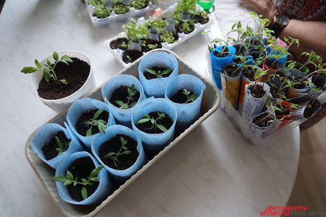 В открытый грунт уже можно высеивать холодостойкие овощи, зелень, цветы и злаки.