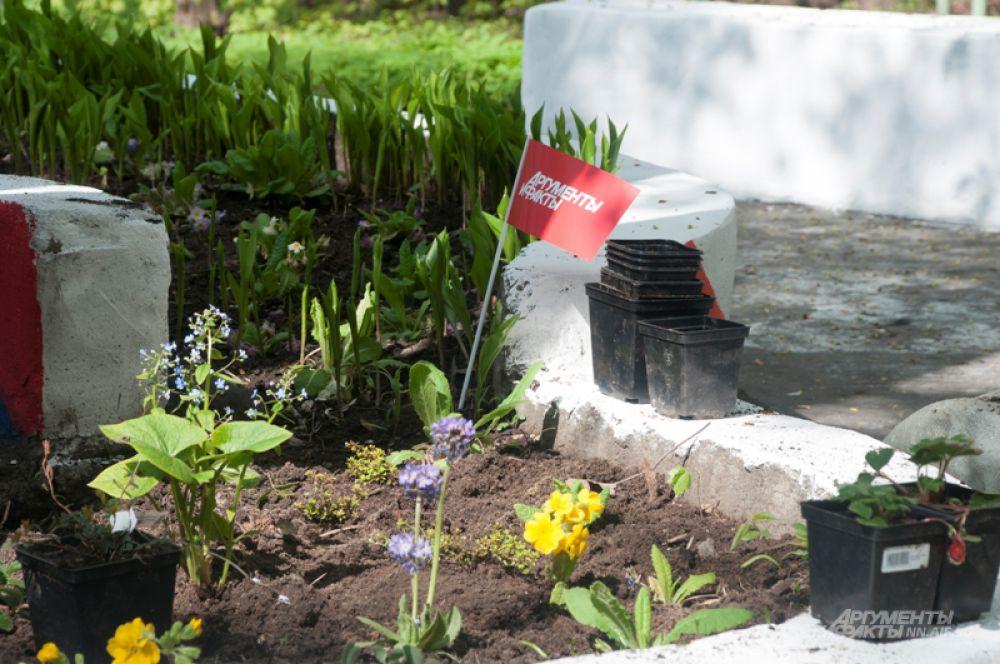 Редакция «АиФ-НН» завершила социальный проект «Лечебная аллея для ветеранов».