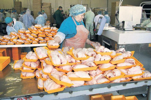 В Новосибирской области производят много курицы.