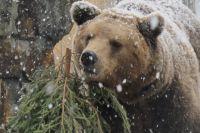Восемь медведей засняли с помощью квадрокоптера в кузбасском заповеднике.