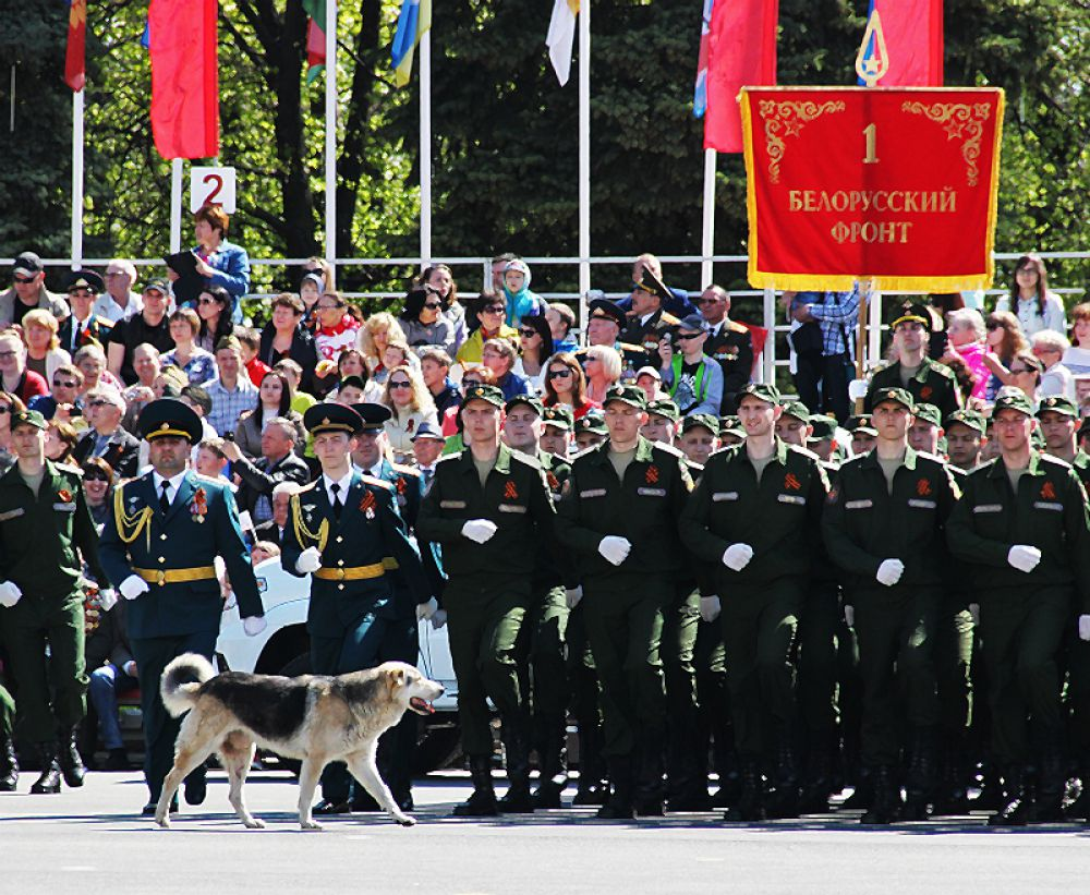 Пёс 1-го Белорусского фронта.
