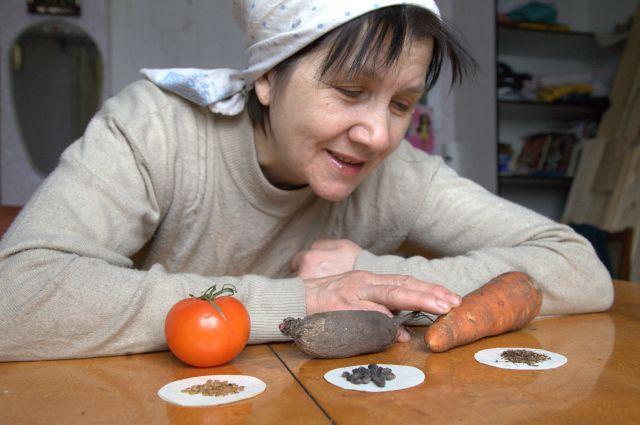 В Прикамье семеноводству овощных культур большого внимания не уделяли. В нашем климате не все культуры вызревают.
