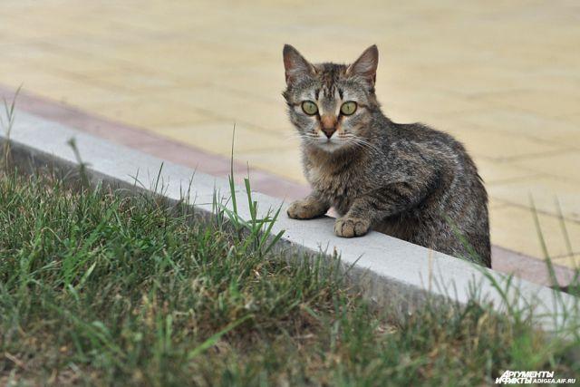 Кот хотел погулять по крыше