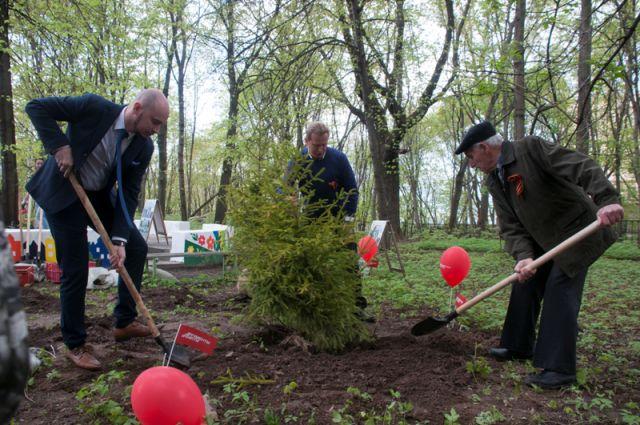 Ветеран Сергей Бровко с радостью участвует в возрождении сквера,  ему помогают Олег Евстафьев (слева) и Игорь Согин (в центре).