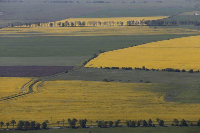 Калининградские фермеры завершают сев яровых.