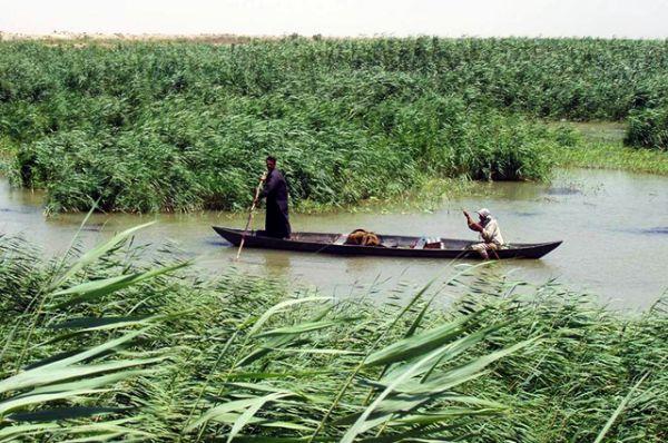 Общая площадь так называемых месопотамских болот на юге Ирака в 1970 году составляла 9 тысяч квадратных километров. Легендарные плавни вокруг Басры оказались на грани исчезновения в результате осуществления бывшим режимом Саддама Хусейна стратегии осушения и строительства дамб через реки Тигр и Евфрат.