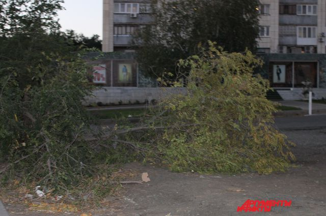 Ветром повалило деревья