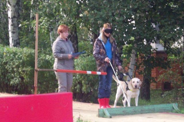 Собаки повадыри помогают передвигаться по городу