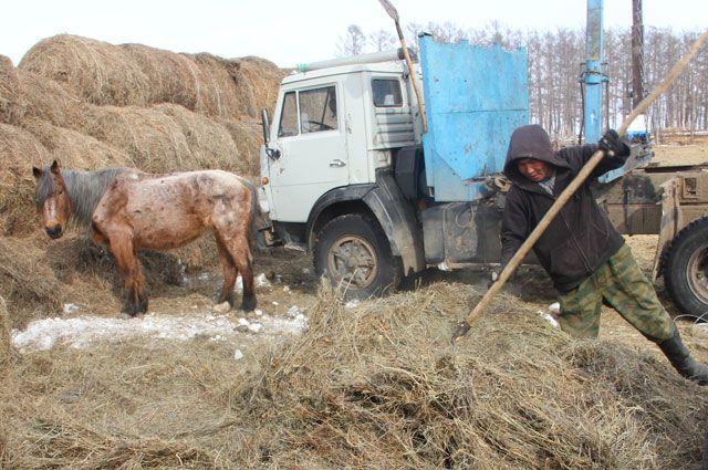 Быть фермером и не замарать свои руки - невозможно.