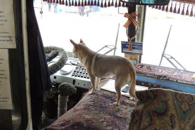 Несколько дней пес скитался по автобусам и трамваям