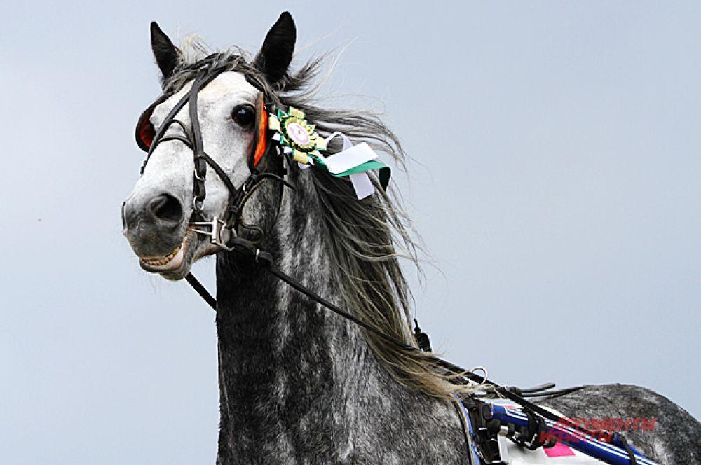 На открытии сезона можно было полюбоваться лошадьми разных мастей, и даже знаменитыми «в яблоках».
