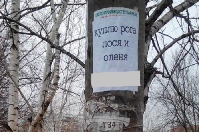 За объявление на березе грозит штраф 3 тыс. рублей