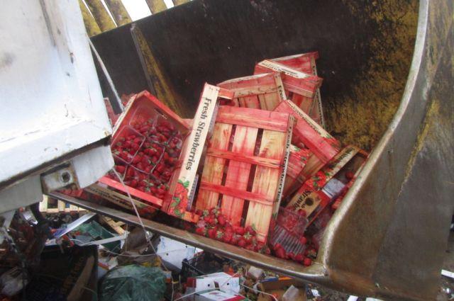 18 тонн санкционных ягод и фруктов уничтожили на полигоне под Калининградом.