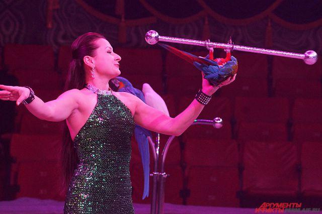 Цирк могут оштрафовать.