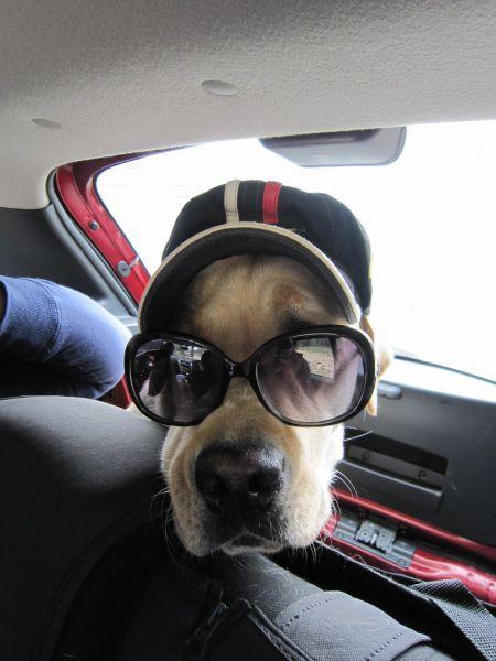 Герой дня умный пёс Мерлин и его хозяйка предупреждают всех о бдительности.