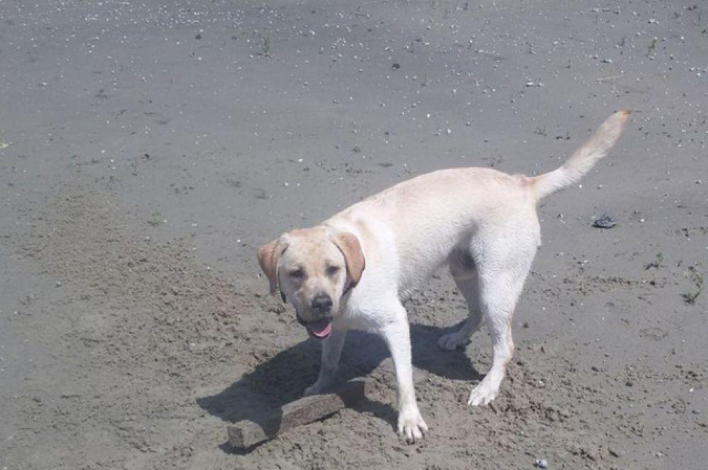 Прогулка с собакой по берегу Дона обернулась для Александры Сурковой приключением с участием полиции. Пёс нашёл в воде боевую гранату.