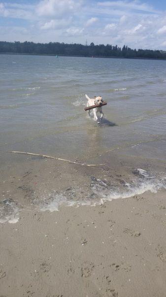 Вначале ничего не предвещало приключений: лабрадор Мерлин, как обычно, бегал по берегу, но неожиданно побежал в реку и начал копать под водой.