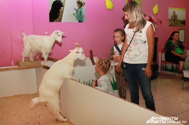 Мучают ли животных в контактном зоопарке?
