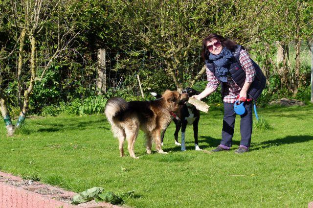 Немцы с радостью берут бездомных собак из России.