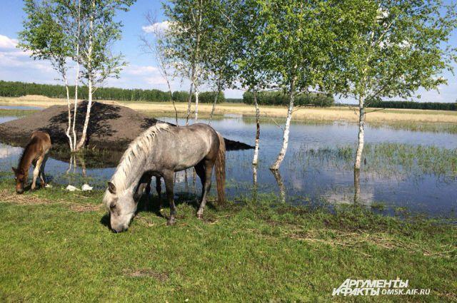 В Омской области можно провести удивительные выходные.