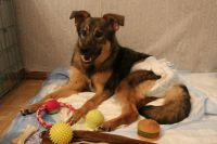 Врачи поставили псу неутешительный диагноз – паралич пятой степени.