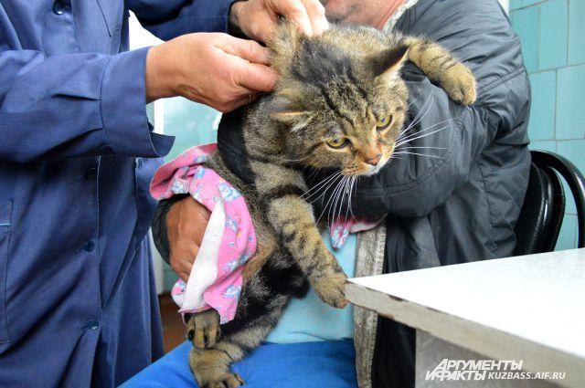 От жары летом страдают не только люди, но и животные.
